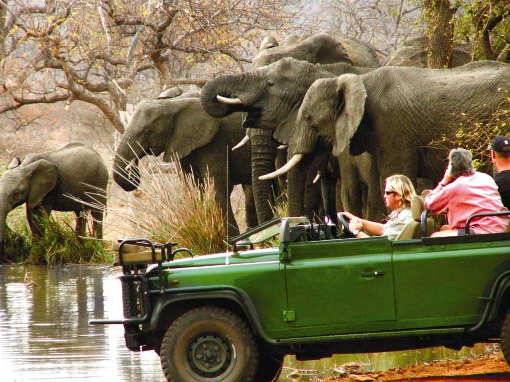 big5-safaris-1g